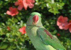 parrot%2021%20small تصاویر بسیاز زیبا از طوطی سانان برای دسکتاپ یا سایر ....