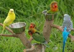 parrot%2024%20small تصاویر بسیاز زیبا از طوطی سانان برای دسکتاپ یا سایر ....
