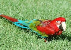 parrot%2025%20small تصاویر بسیاز زیبا از طوطی سانان برای دسکتاپ یا سایر ....